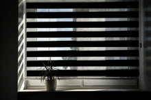 Silhouette Of Flowerpot With Flower On Window Sill Of Room Window, Morning Light Enters House Through Shutter