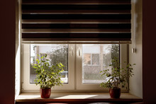 Window Shutter In Apartment Are Open, Two Flowerpots On Windowsill With Flowers, Day On Street
