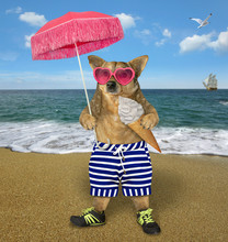 The Dog In Pink Sunglasses Holds An Ice Cream Cone And An Umbrella On The Beach Of The Sea. It Is Wearing A Sports Shoes And Striped Shorts.