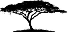 Silhouette Of The Tree-acacia.