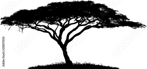 Silhouette of the tree-acacia. Canvas Print