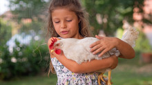 Authentic Moment Of Happy Little Smiling Girl Is Holding A White Hen Outside The Countryside House In A Sunny Summer Day.