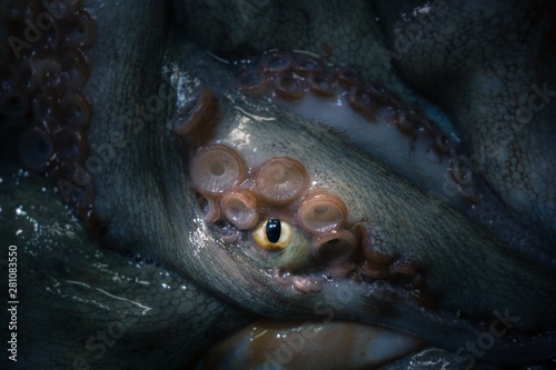 Fotografie, Obraz  The tentacles and eye of octopus