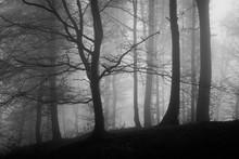 Dark Forest With Fog