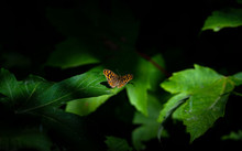 Beautiful Butterfly Outdoors