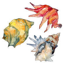Summer Beach Seashell Tropical Elements. Watercolor Background Illustration Set. Isolated Shell Illustration.