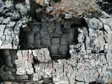 Charred Logs