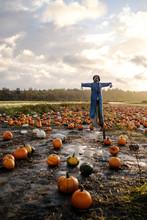 Scarecrow On Pumpkin Farm During Fall Season