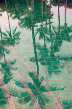 Palm Trees Reflected In A Pool