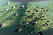Beautiful Birds With Long Beaks Swimming