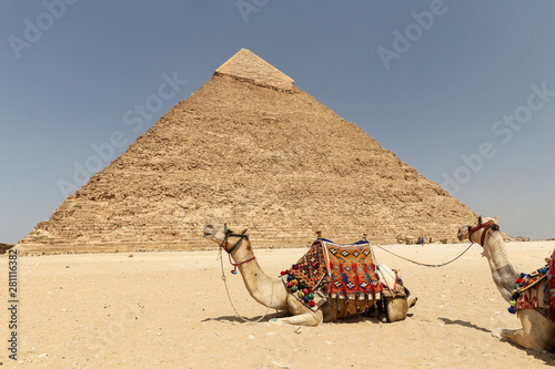 Poster Chameau Pyramid of Khafre in Giza Pyramid Complex, Cairo, Egypt