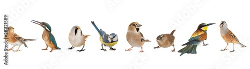Group of birds isolated on white background