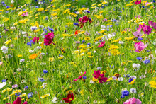 Field Of Colorful, Wild Flowers