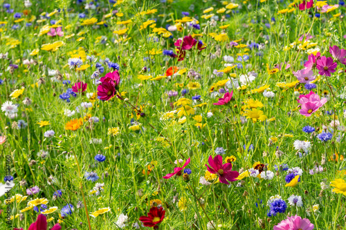 field of colorful, wild flowers - 281127160