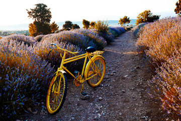 yellow bicycle in the laven...