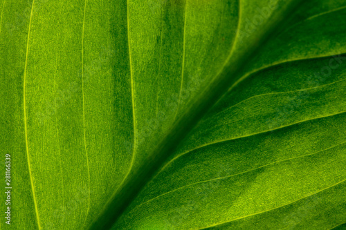 fototapeta na lodówkę Abstract green striped nature background, vintage tone. green textured leaf of the plant. natural eco background.
