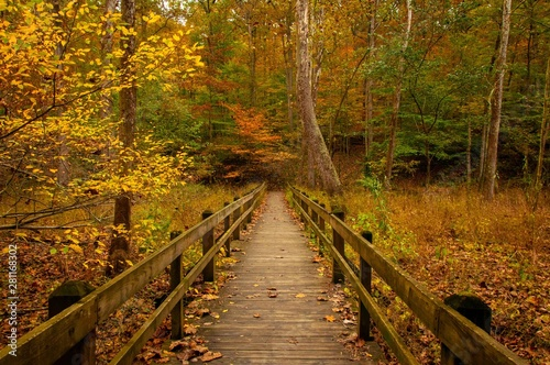 Spoed Foto op Canvas Weg in bos Brown County State Park - Autumn - Indiana - Boardwalk