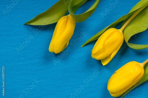yellow fresh spring flowers...