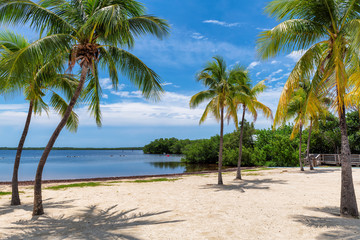 Sunny beach with coco palms and tropical sea in Key Largo beach, Florida.