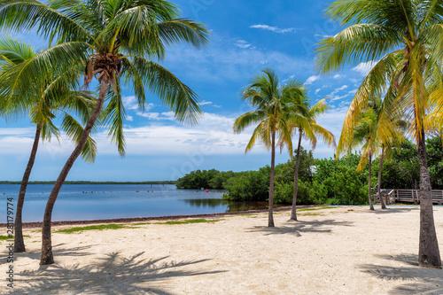 Valokuva Sunny beach with coco palms and tropical sea in Key Largo beach, Florida