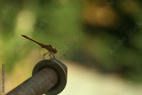 Fényképezés gray dragonfly sits on a beautifully blurred green background