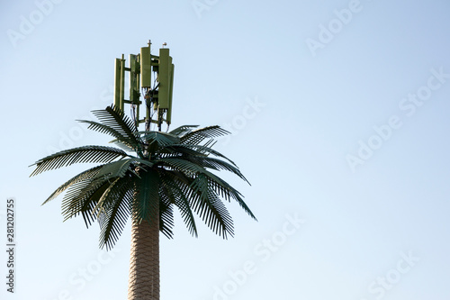 Tablou Canvas cellular antenna hidden in a palm tree