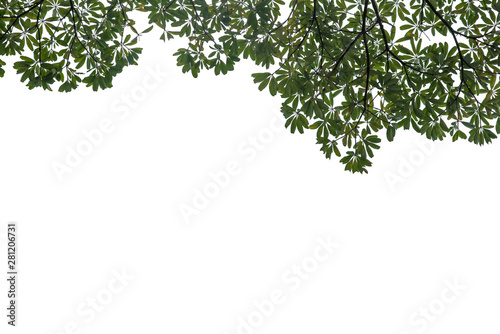 Pinturas sobre lienzo  Fresh and green leaves isolated on white background with clipping path, Natural backgrounds