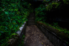 Forgotten Pathways In Bali