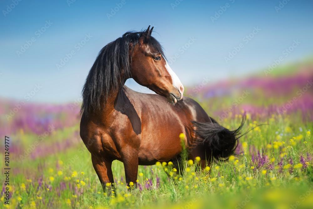 Fototapeta Close up horse portrait in flowers meadow