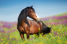 Close Up Horse Portrait In Flowers Meadow