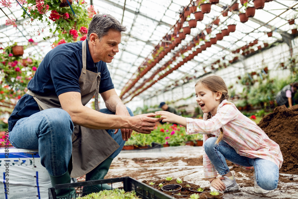 Fototapety, obrazy: Happy little girl potting plants with her father in a greenhouse.