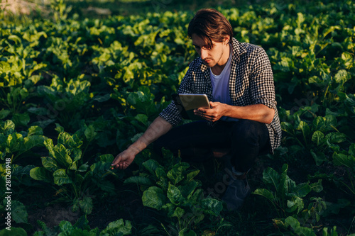 Agronomist  in a field  taking control of the yield with ipad and regard a plant Canvas Print