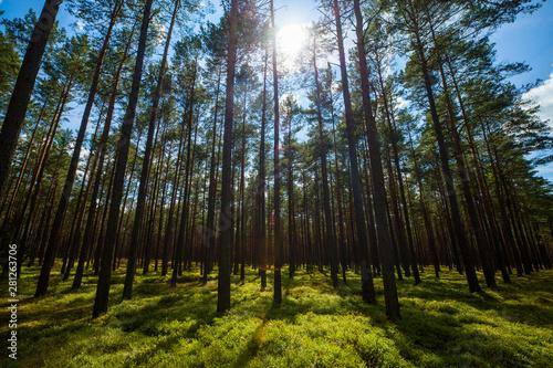 Obraz Las światło lato krajobraz cisza - fototapety do salonu