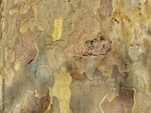 Foto auf Leinwand Alte schmutzig texturierte wand tree board background