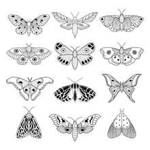 Set Of Hand Drawn Moths