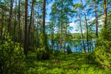 Zielony las jezioro sosny wakacje przyroda
