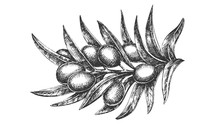 Organic Natural Olive Branch H...