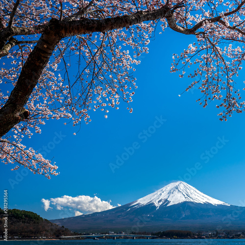 Foto auf Gartenposter Blau Jeans Mt. Fuji in the spring time with cherry blossoms at kawaguchiko Fujiyoshida, Japan.