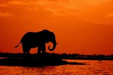 Elephant Herd Sunset Botswana.