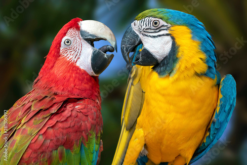 Tuinposter Papegaai The parrots love each other