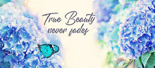 True Beauty Never Fades - Inspiration Quote. Beautiful Hydrangea And Butterfly, Dreamy Feel Image. Blue Hydrangea Flowers Background. Delicate Summer Spring Floral Background. Soft Selective Focus