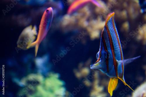 plakat Fisch