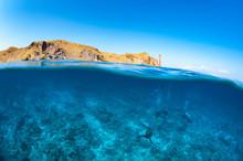 Half Above Half Below - Divers (assorted)
