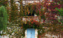 Colorful Ivy Coverd The Building In Sichuan China At Autumn.