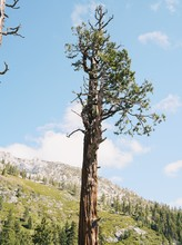 A Single Tree Stands Tall In T...