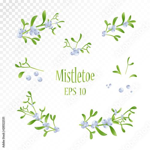 Fototapeta  Realistic drawing of mistletoe sprig with berries and leaves