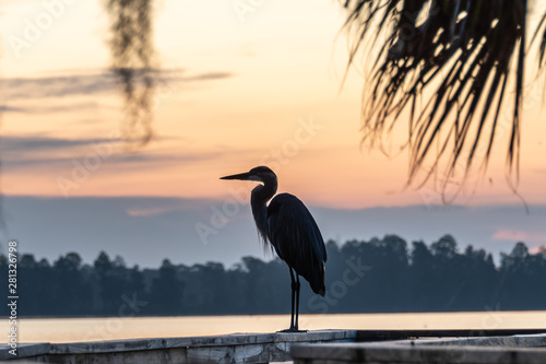 Foto auf Leinwand Beige Silhouette of a great blue heron watching the sunrise view