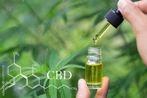 cbd hemp oil, formula CBD cannabidiol, doctor hand hold and offer to patient medical marijuana and oil Canvas-taulu