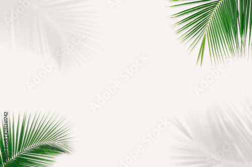 Minimal background of coconut palm leaves on the wall with shadow. - 281361742