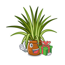 With Gift Spider Plants In A C...